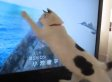 Cat Attacks Birds On TV Every Single Time (VIDEO)
