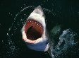 'Jaws': Alternative Titles Suggest A Very Different Story (PHOTOS)
