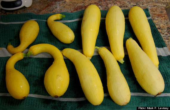 Summer Squash Guide: What's What And How To Cook Them ...