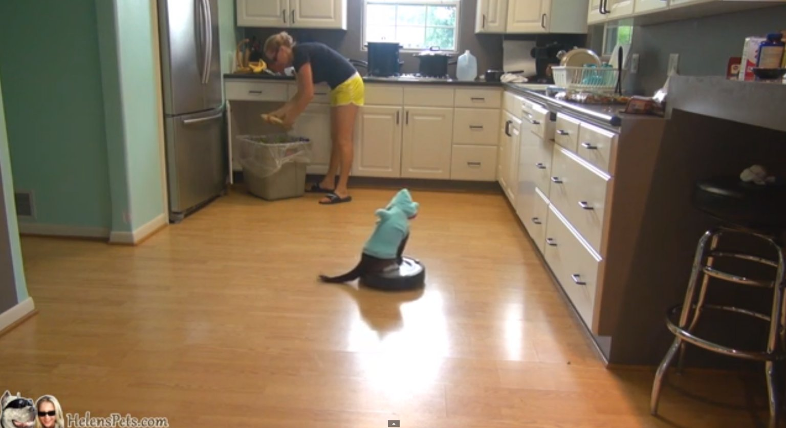 The Cat Dressed As A Shark Riding On A Roomba Is Back Video