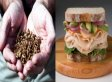 Joel Woloshuk Finds Maggots On Sandwich At Atlanta Airport Café
