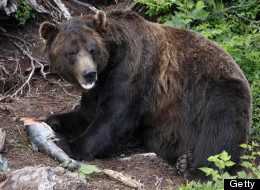 B.C. Bear Hunters Should Be Forced To Take Meat Home: MLA
