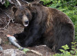 Fraser Graham Kills Grizzly Bear With Knife While Hunting In Chain Lakes Area Of Alberta