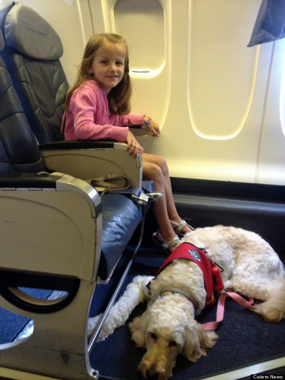 Goldendoodle Helps 7 Year Old Girl Meghan Weingarth With