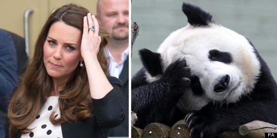 kate panda 4
