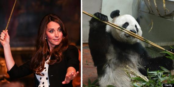 panda kate 6