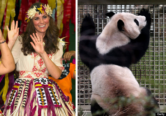 kate duchess panda