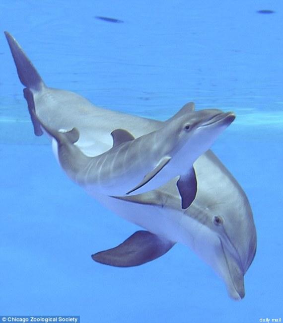 delfino zoo chicago