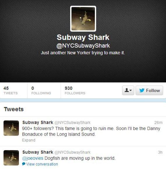 twitter subway shark