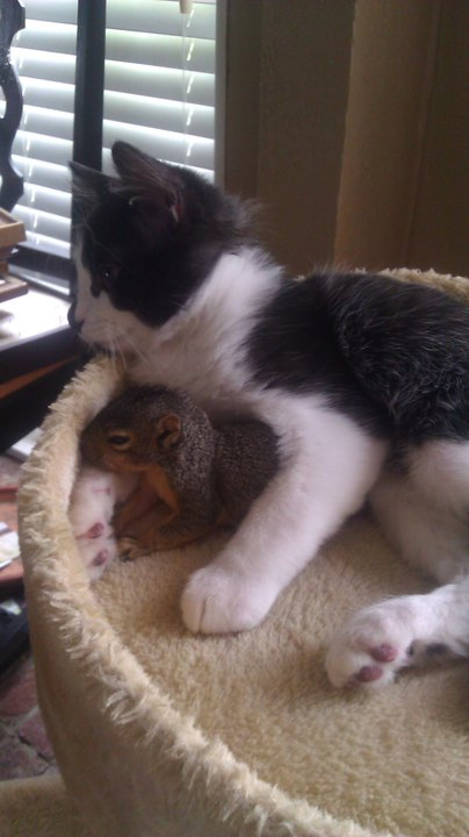 squirrel and cat form unlikely friendship  photo