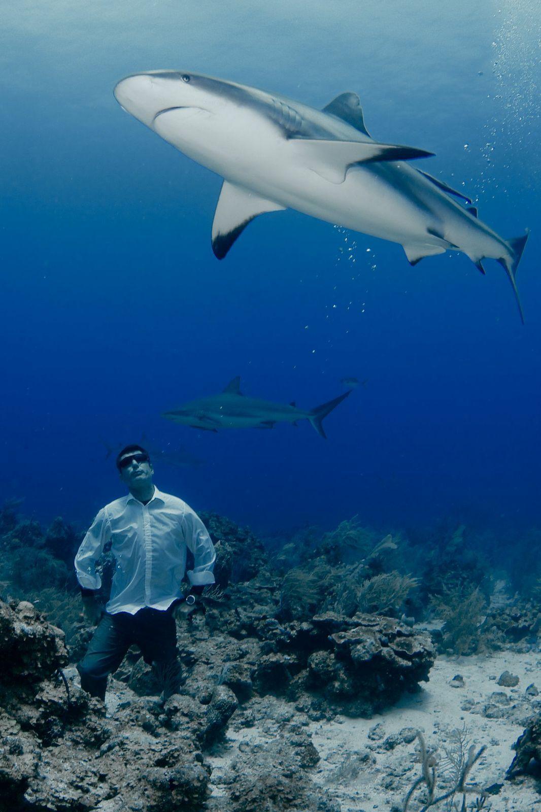 underwater photos shark