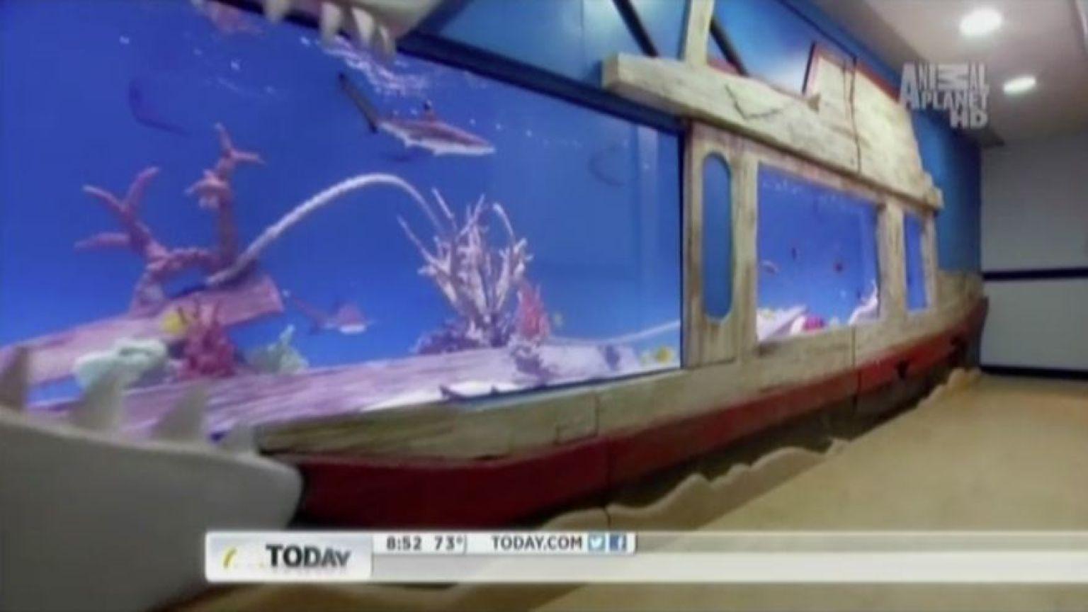 Tanked fish tanks tracy morgan for Tanked fish tanks