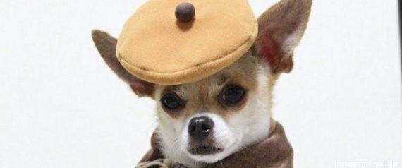 Montjiro chien