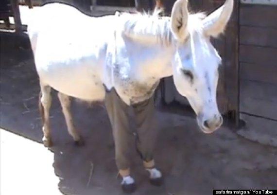haim donkey