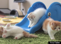 WATCH: What Could Be Better Than Kittens On An Elephant Slide?