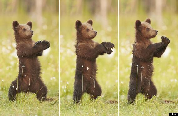 gangnam bear