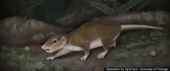 First Mammals Early mammalsFirst Mammals On Earth