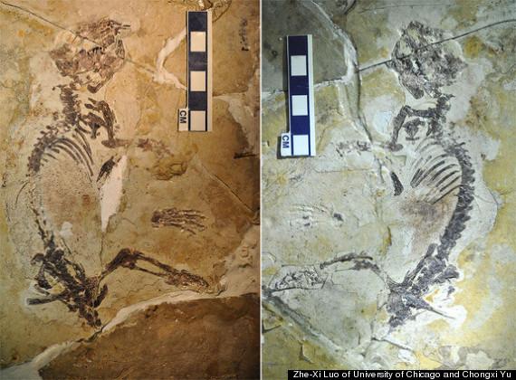 ancient mammal