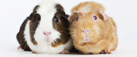 Sex stories the guinea pig