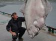 515-Pound Halibut Caught By Marco Leibenow Near Norway May Be World Record (PHOTO)