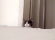 Cat Plays Adorable Game Of Peek-A-Boo (VIDEO)