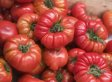 Heirloom Tomatoes Explained In Vanity Fair's 'Snob's Dictionary' (VIDEO)