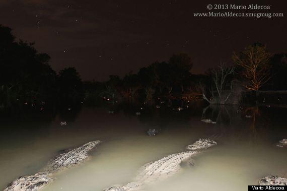nite gators