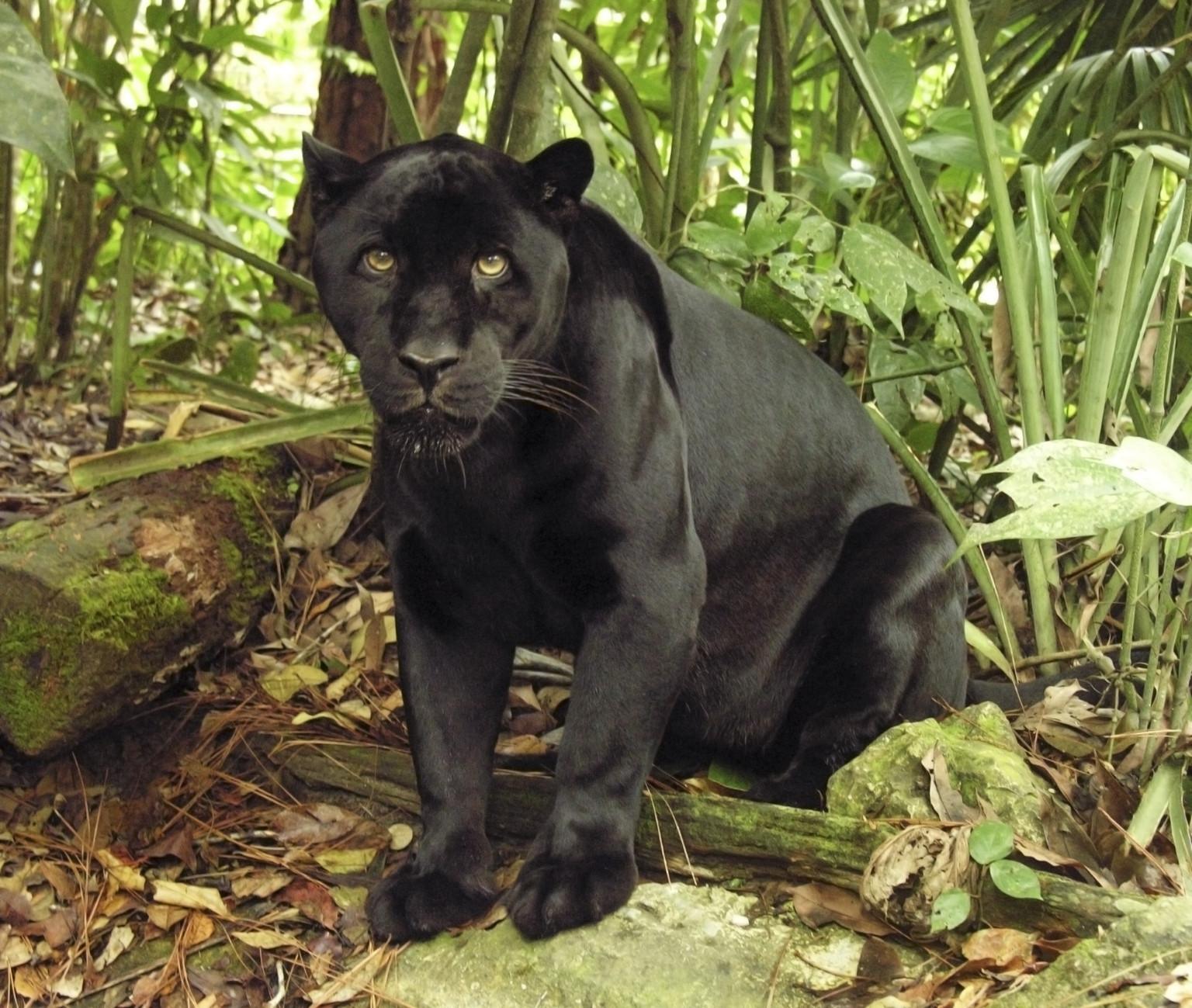 Jungle Book: Look for the Bare Necessities | Cara Joy David