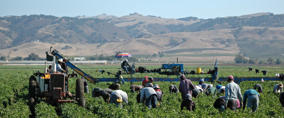 CALIFORNIA FARM LATINO