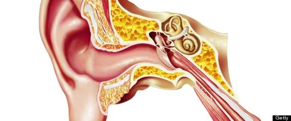 cochlea sound