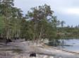 Louisiana Sinkhole Video: Trees Disappear