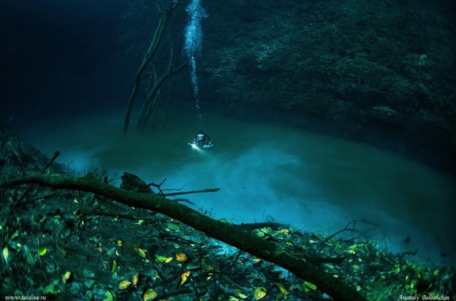 saltwater and freshwater meet underwater forest