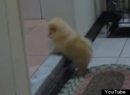 WATCH: Tiny Puppy Is Determined To Climb Step