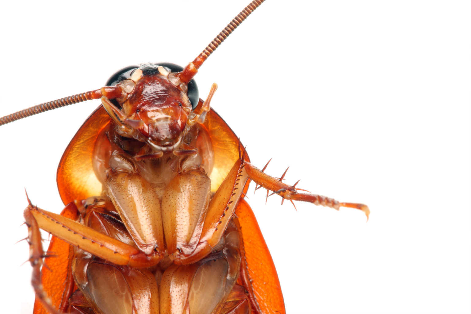 the cockroach How can the answer be improved.