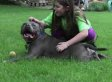 Emma Wishneski, Sandy Hook Student, Finds A Friend In Rescued Pit Bull (PHOTOS)