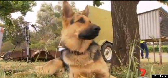 (Imperdible) Los 16 perros más leales de todos los tiempos