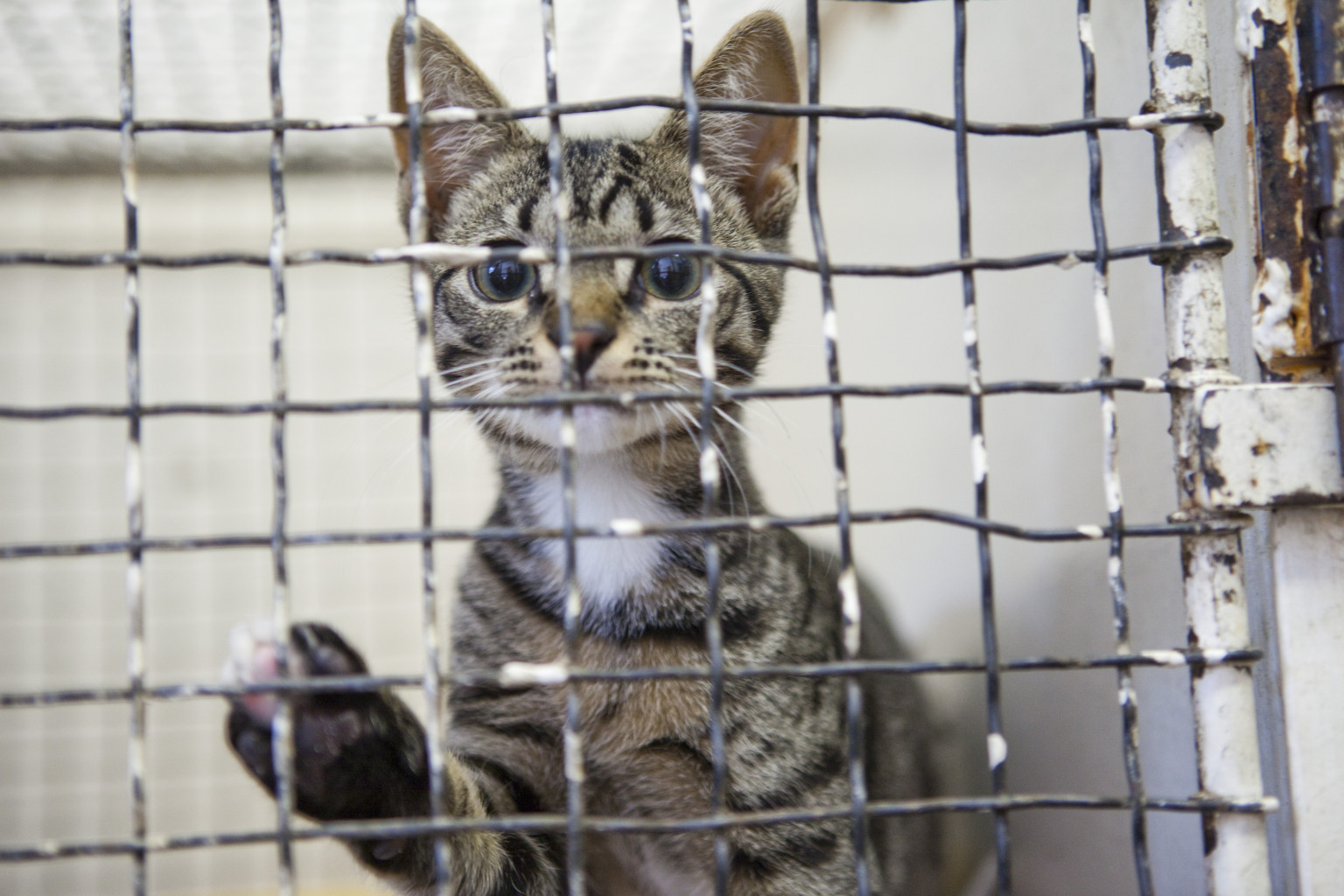 cats in shelters breaking the vicious circle huffpost