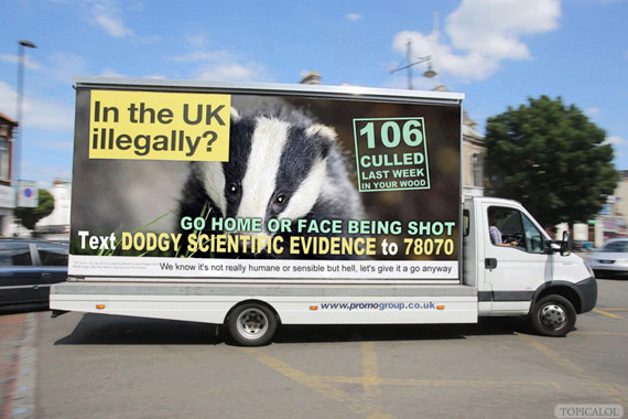badger cull van
