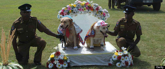 r-DOG-WEDDING-large570 - Dog Wedding Puts Sri Lankan Police In The Doghouse - Weird and Extreme