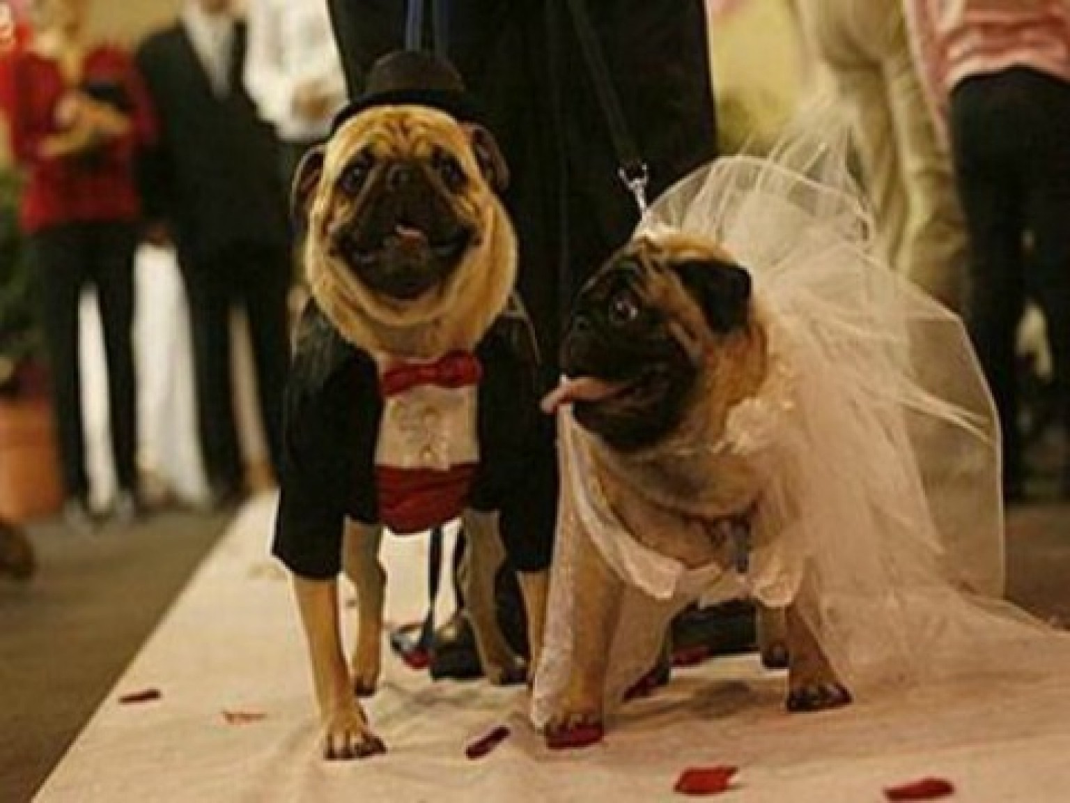 The 12 Most Ridiculous Animal Weddings (PHOTOS) | HuffPost