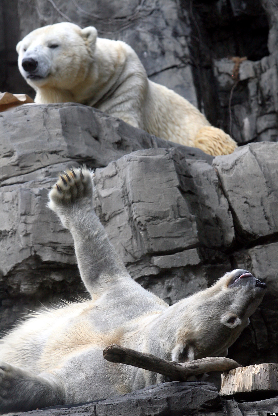 gus ida polar bears