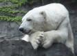 Gus, Central Park Zoo's Polar Bear, Has Died