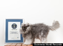 WATCH: Colonel Meow Is 'World's Hairiest Cat