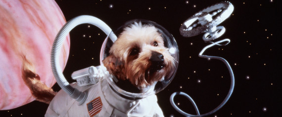 ANIMAL IN SPACE