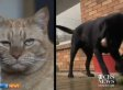 Dog Donates Blood To Save New Zealand Cat's Life (VIDEO)