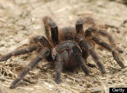 LISTEN: Girl Calls 911 Over 'Massive Freaking Spider'