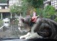 Dashboard Cat vs. Windshield Wipers In Ultimate Showdown (VIDEO)