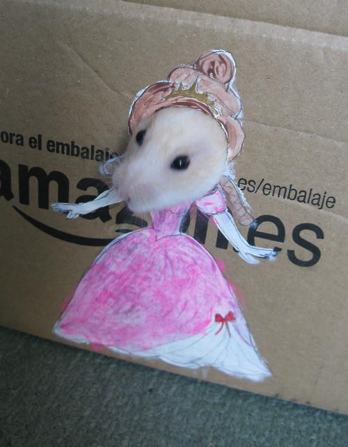 dress hamster