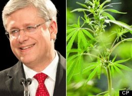 stephen harper pot