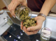 These States Are Most Likely To Legalize Pot Next